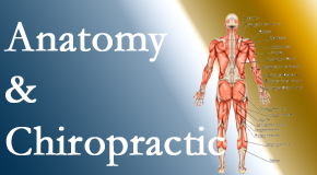 Most Chiropractic Clinic confidently delivers chiropractic care based on knowledge of anatomy to diagnose and treat spine related pain.