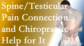 Most Chiropractic Clinic explains recent research on the connection of testicular pain to the spine and how chiropractic care helps its relief.